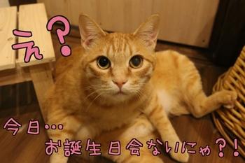 IMG_0521.JPG
